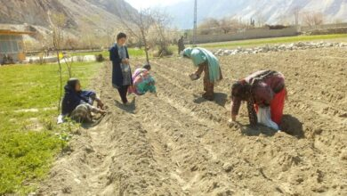 Photo of Feature: One Woman's Dream Fueled Gilgit Baltistan's Flower Industry