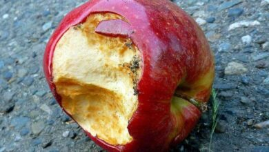Photo of Blog: Rotten Apples, Though Apples, But Bad for Consumption